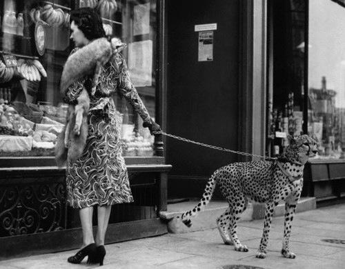 Pet Cheetah Goes Shopping